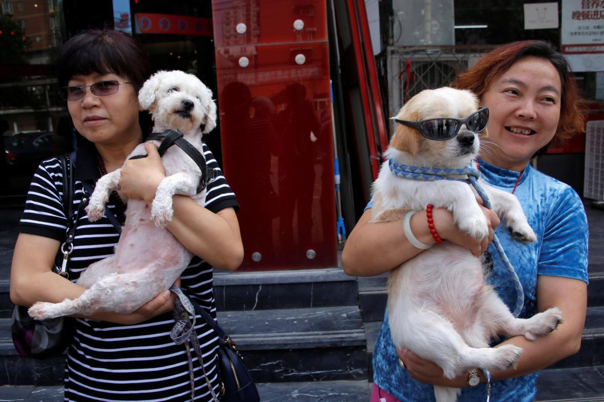 Čínské aktivistky se psy zachráněnými před snědením