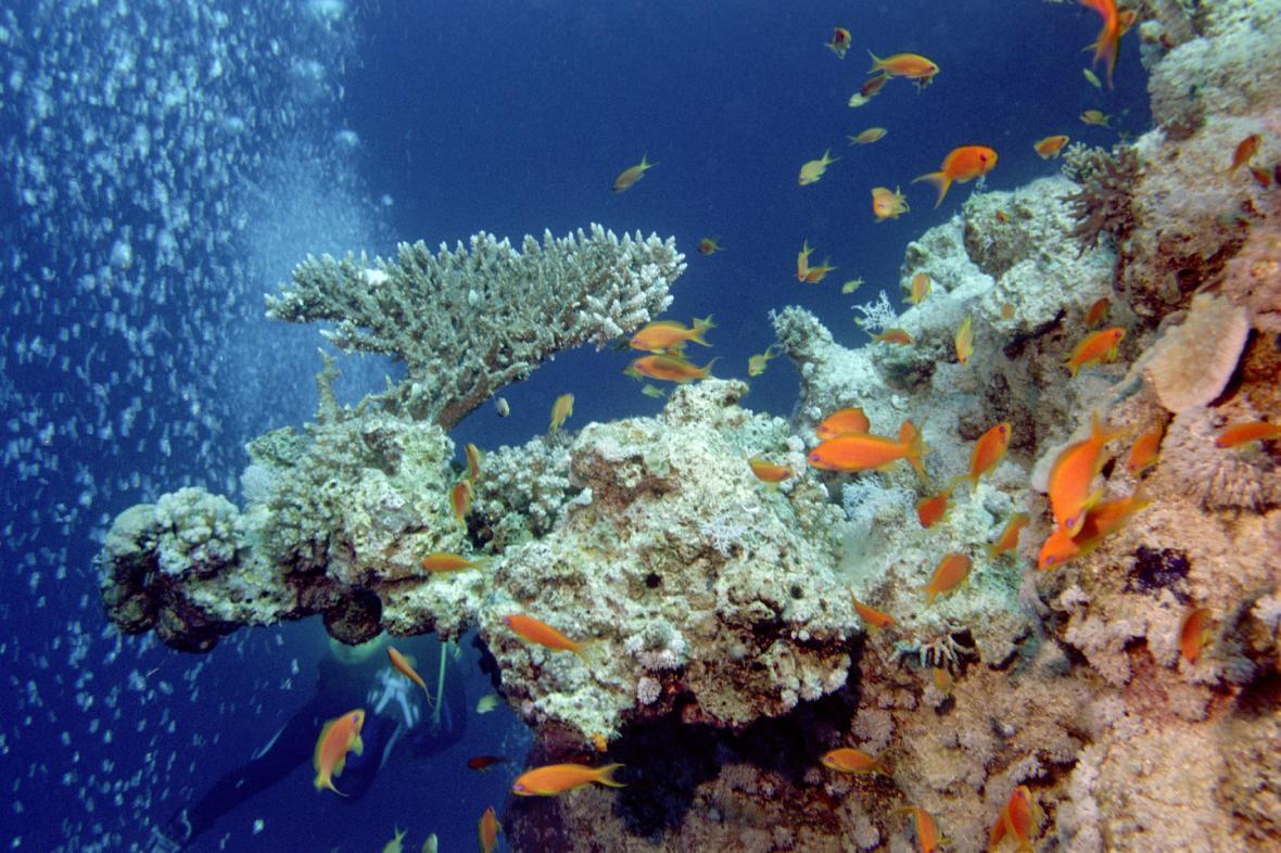 Korálové útesy v Rudém moři