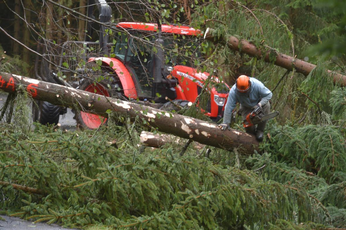 Odstraňování popadaných stromů na Sokolovsku