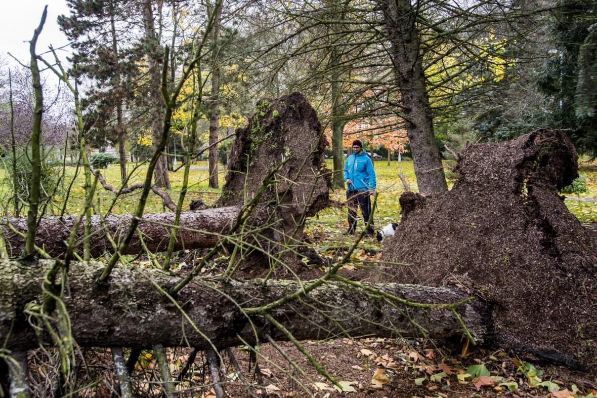 Následky větru v Hradci Králové (29. 10. 2017)