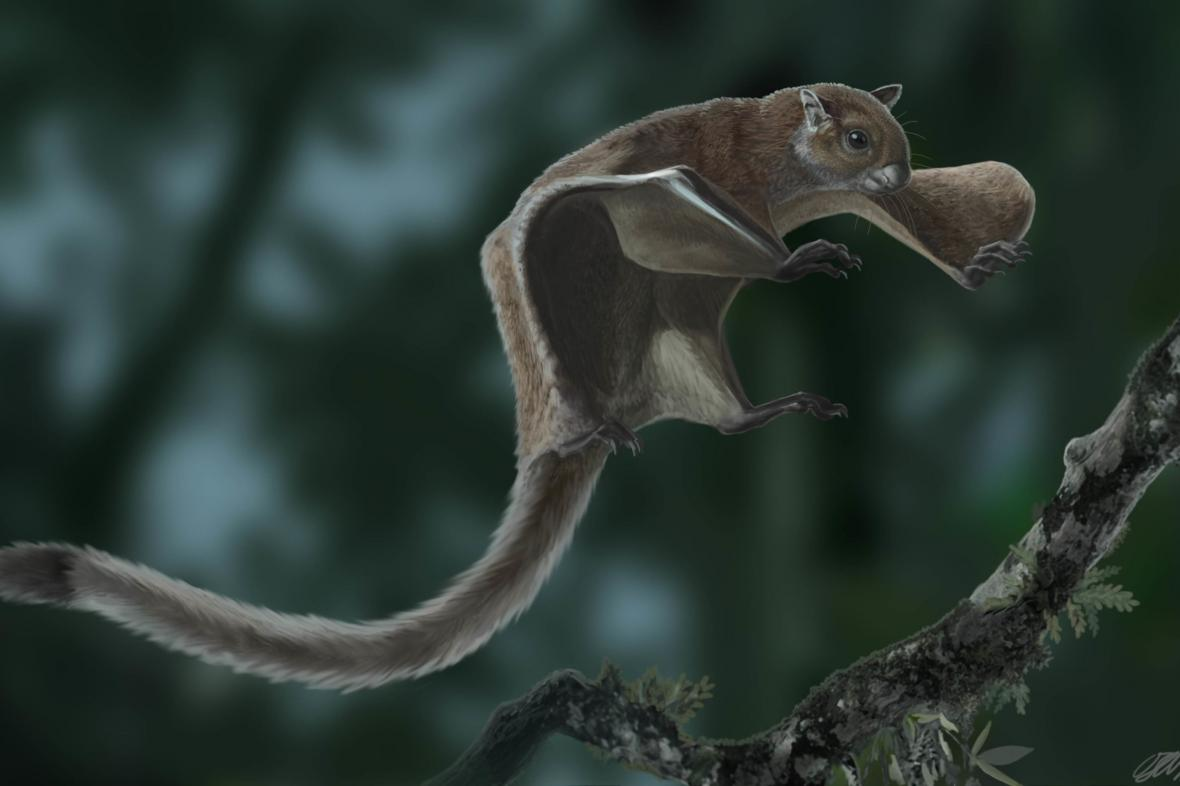 Miopetaurista neogrivensis