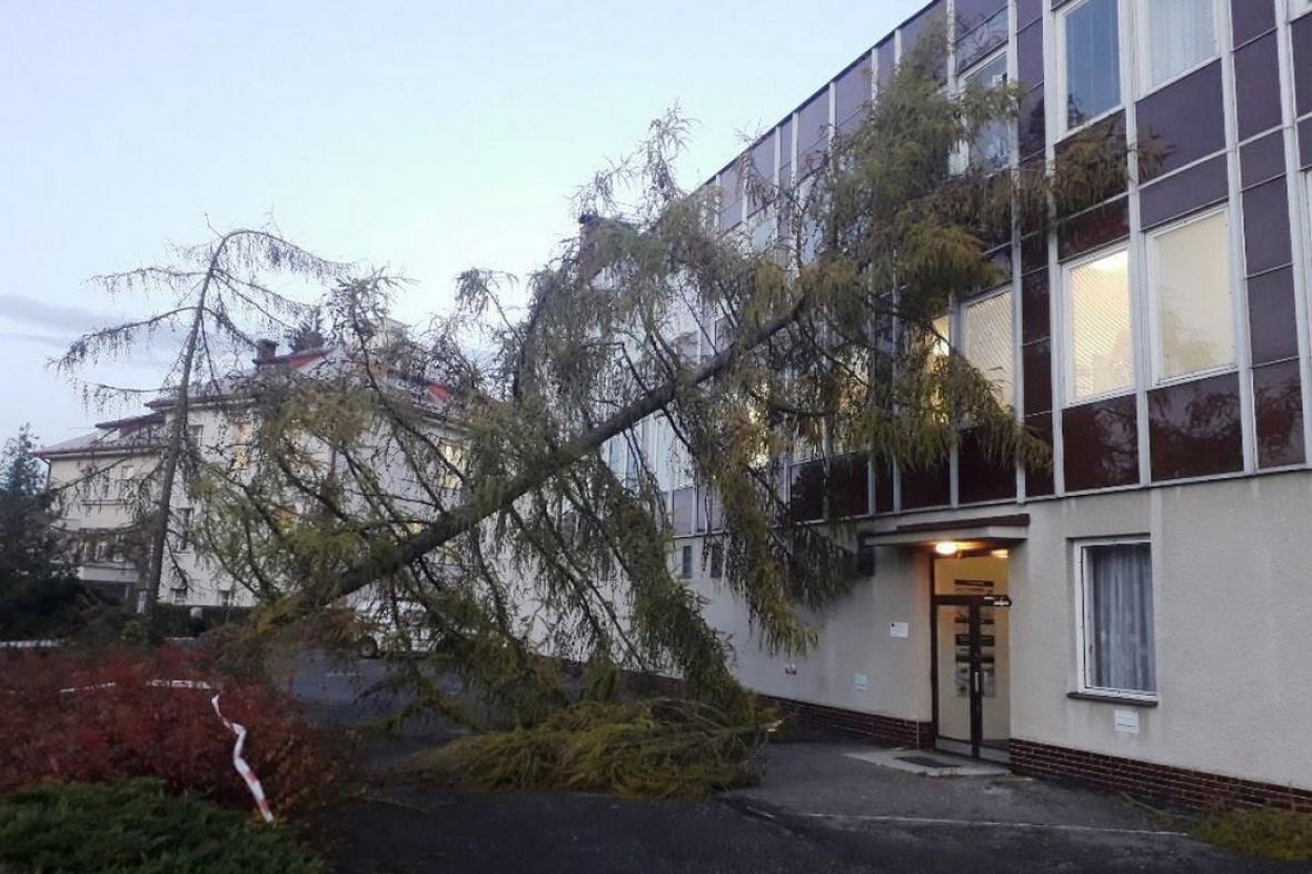 Strom spadlý na budovu v Chotěboři
