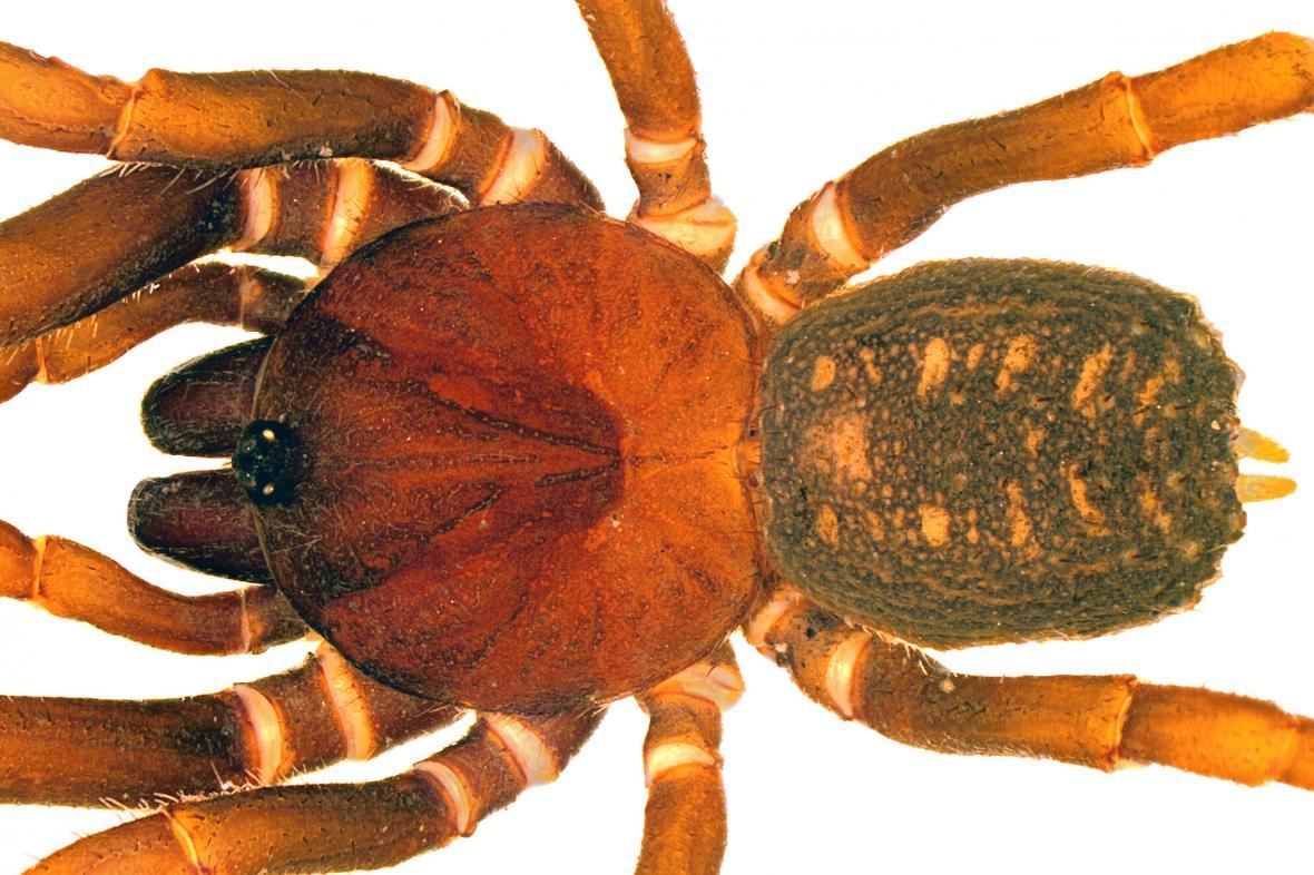Nejvýše žijící pavouk z rodu Stormtropis