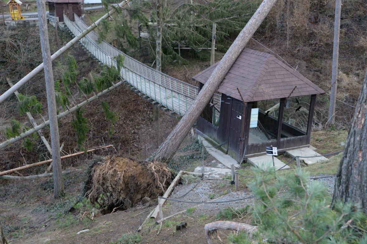 Výběh makaků v ZOO Olomouc po vichřici Ebergard