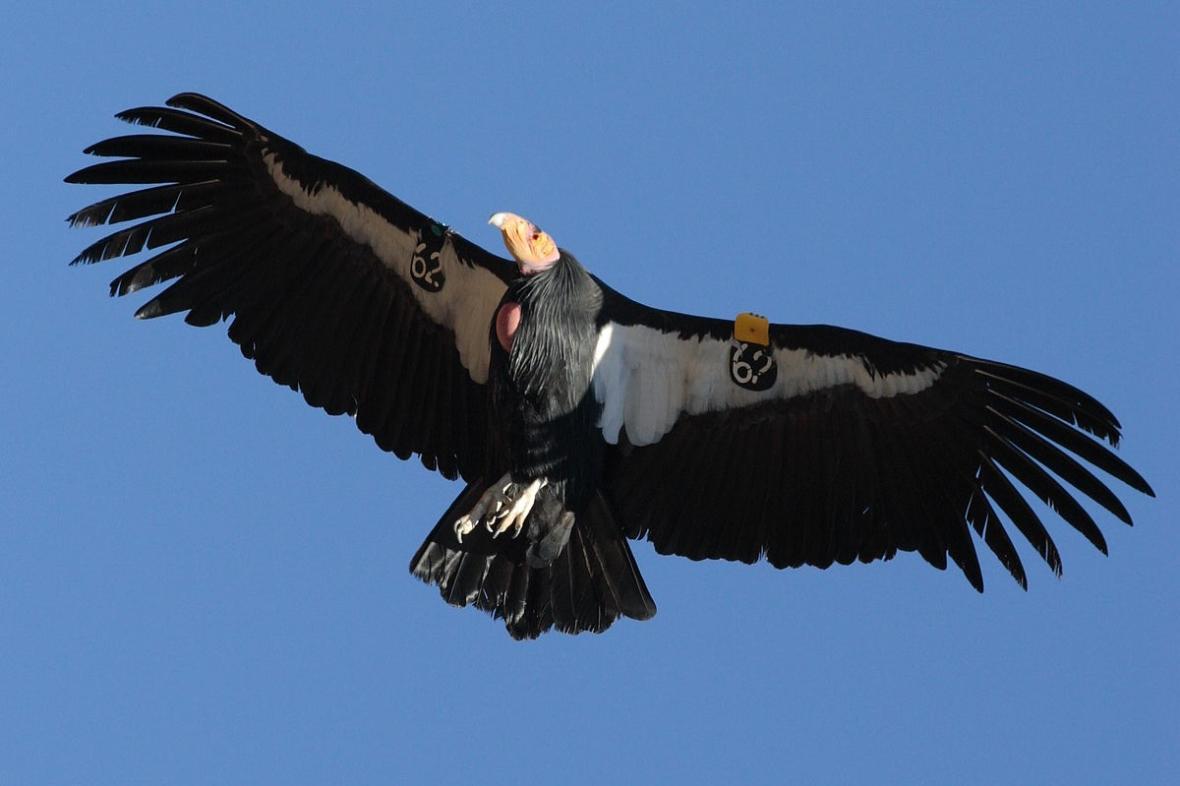 obrázky obrovských ptáků
