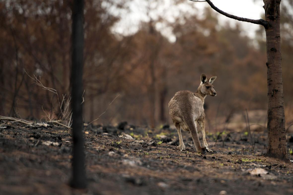 Spálená země v australském městě Cobargo