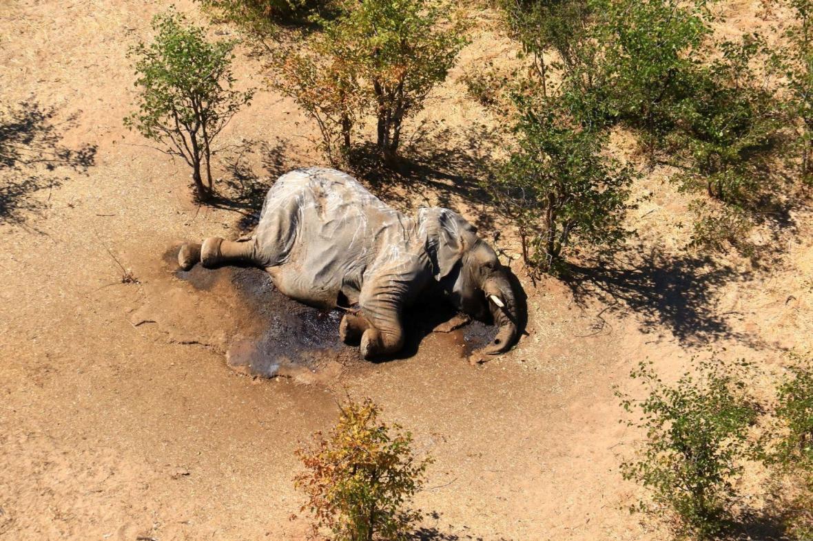 Mrtví slon v Botswaně
