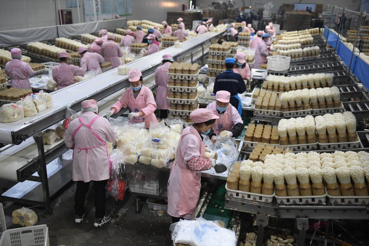 Pracovníci balí jedlé houby