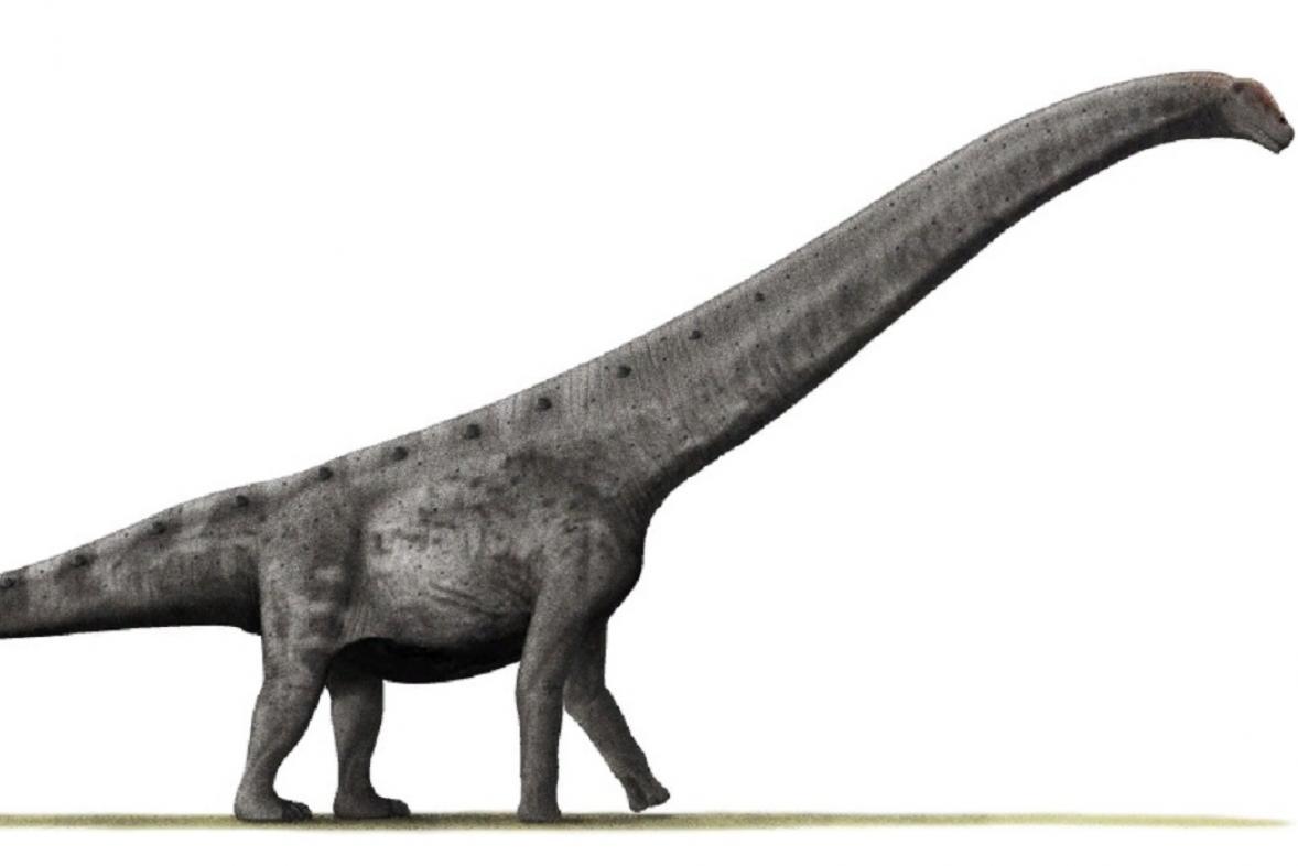 Argentinosaurus - jeden z největších dinosaurů