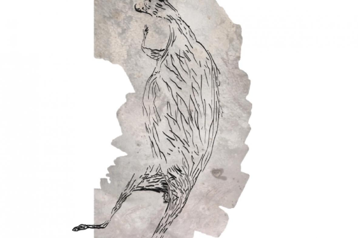 Malba klokana