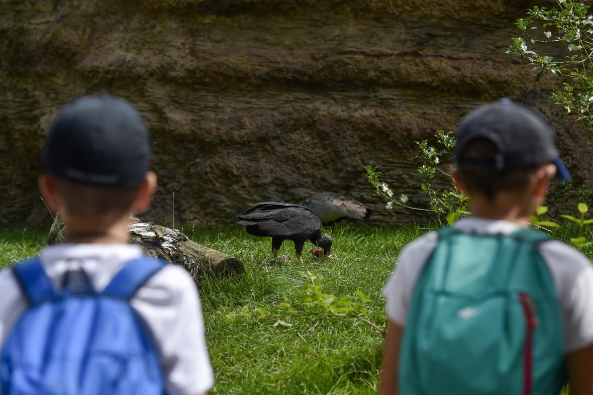 Ve voliéře se návštěvníci prochází přímo mezi ptáky