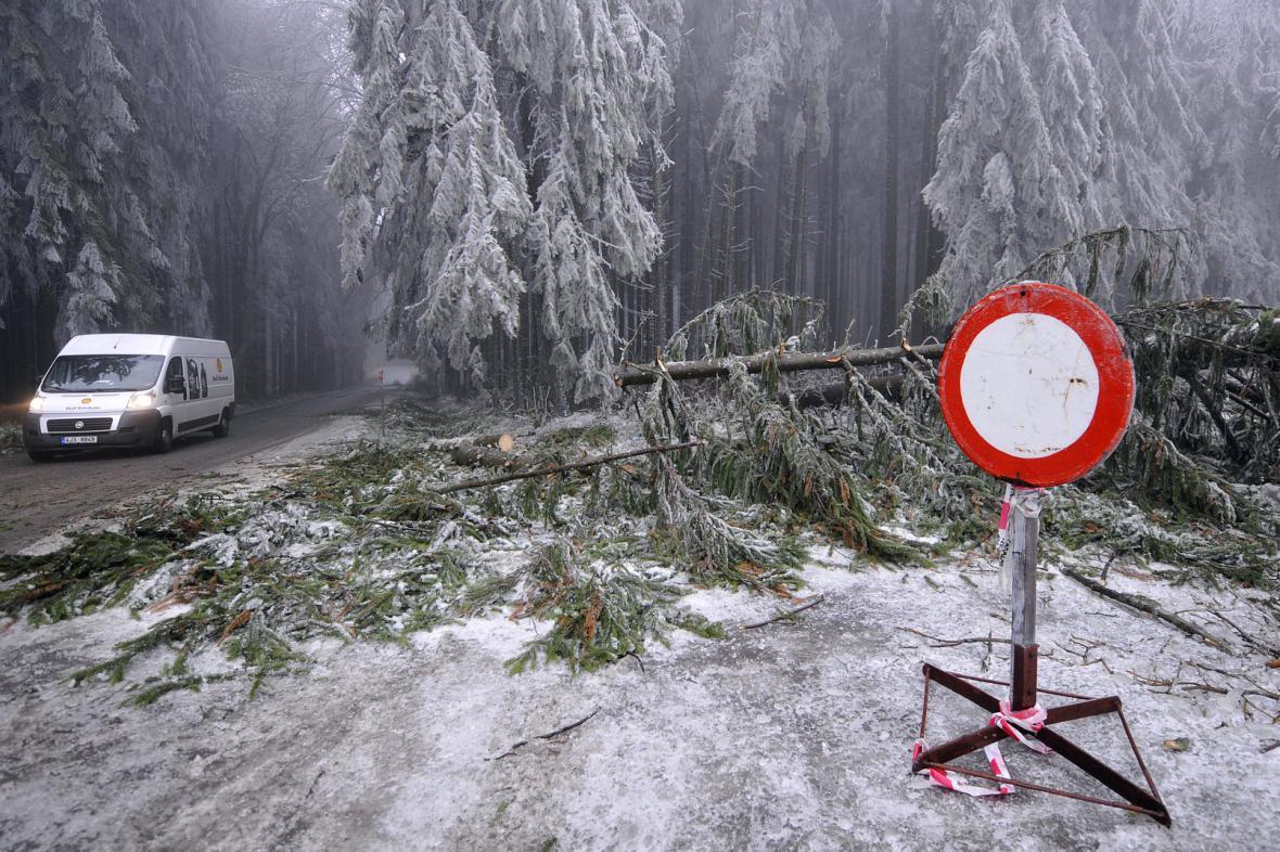 Stromy pod ledovou tíhou