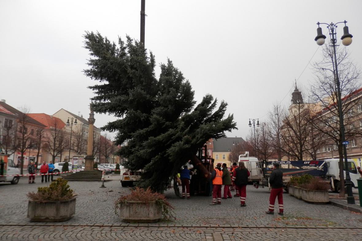 Zvedání vánočního stromu
