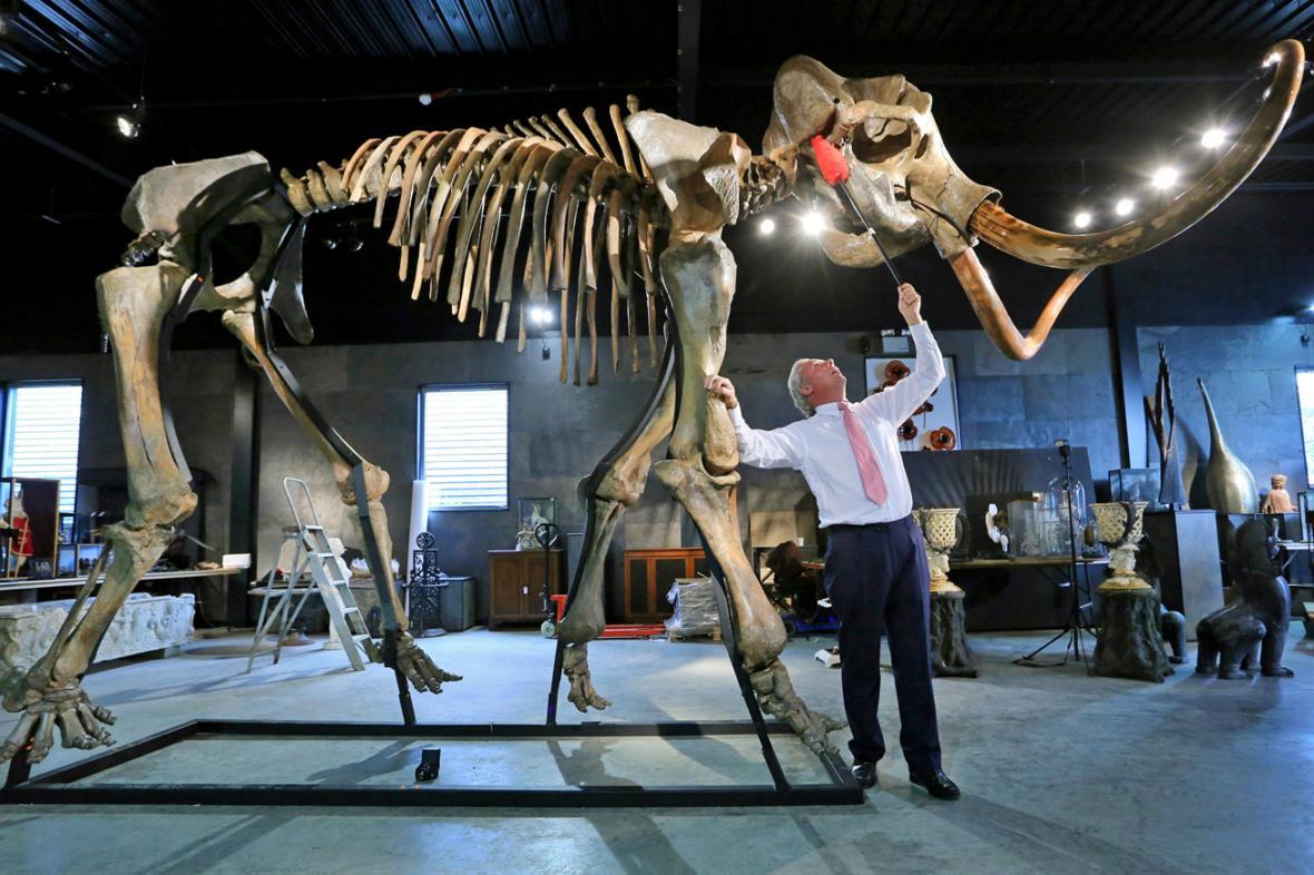 Kostra mamuta Montyho