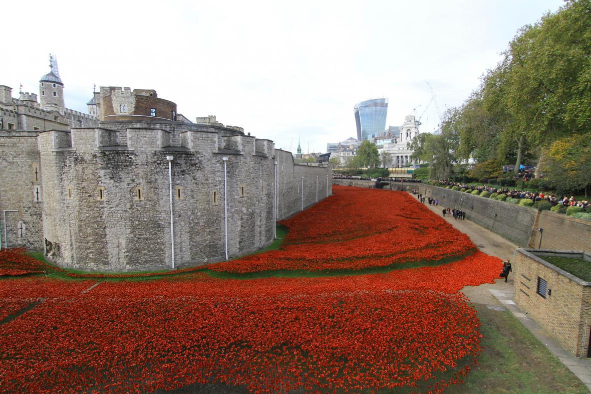 Vlčí máky u londýnského Toweru