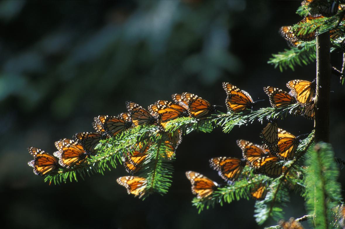 Monarchové v Mexiku