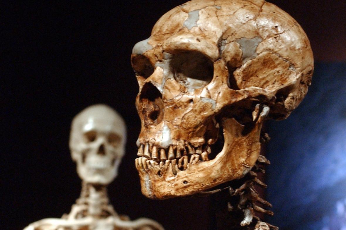 Lebka moderního člověka (vlevo) a neandrtálce (vpravo)