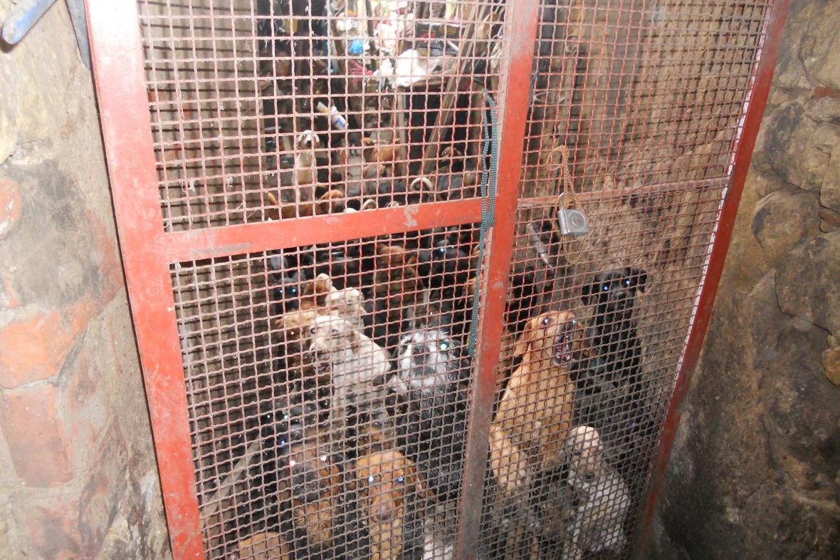 Týraní psi z Mladé Boleslavi