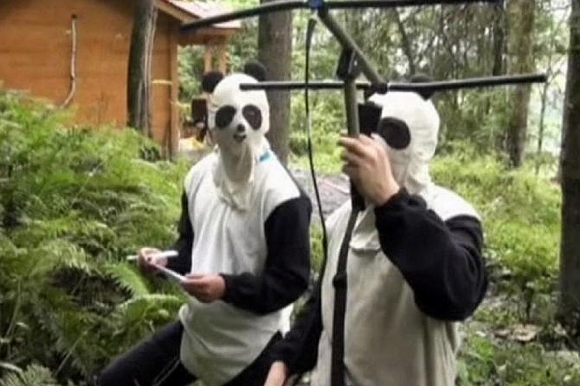Pandí kamufláž