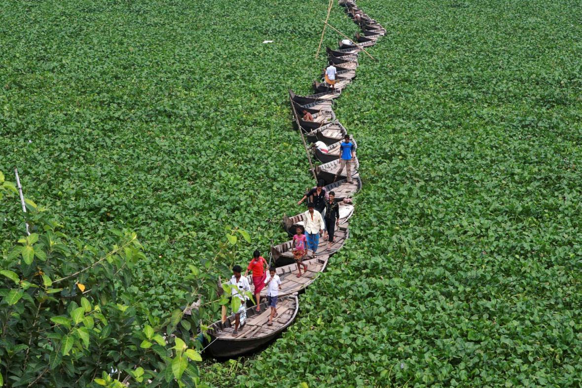 Invazivní hyacint v Bangladéši