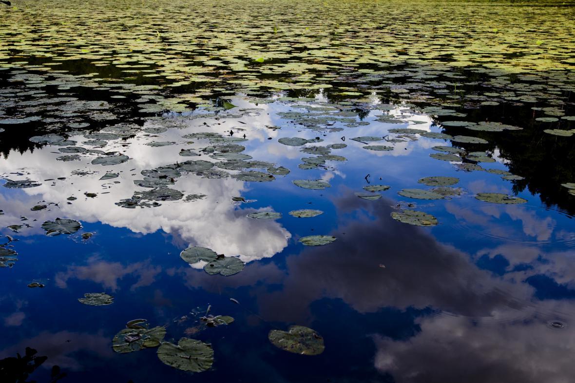 Rybník Stříbrník na Kokořínsku