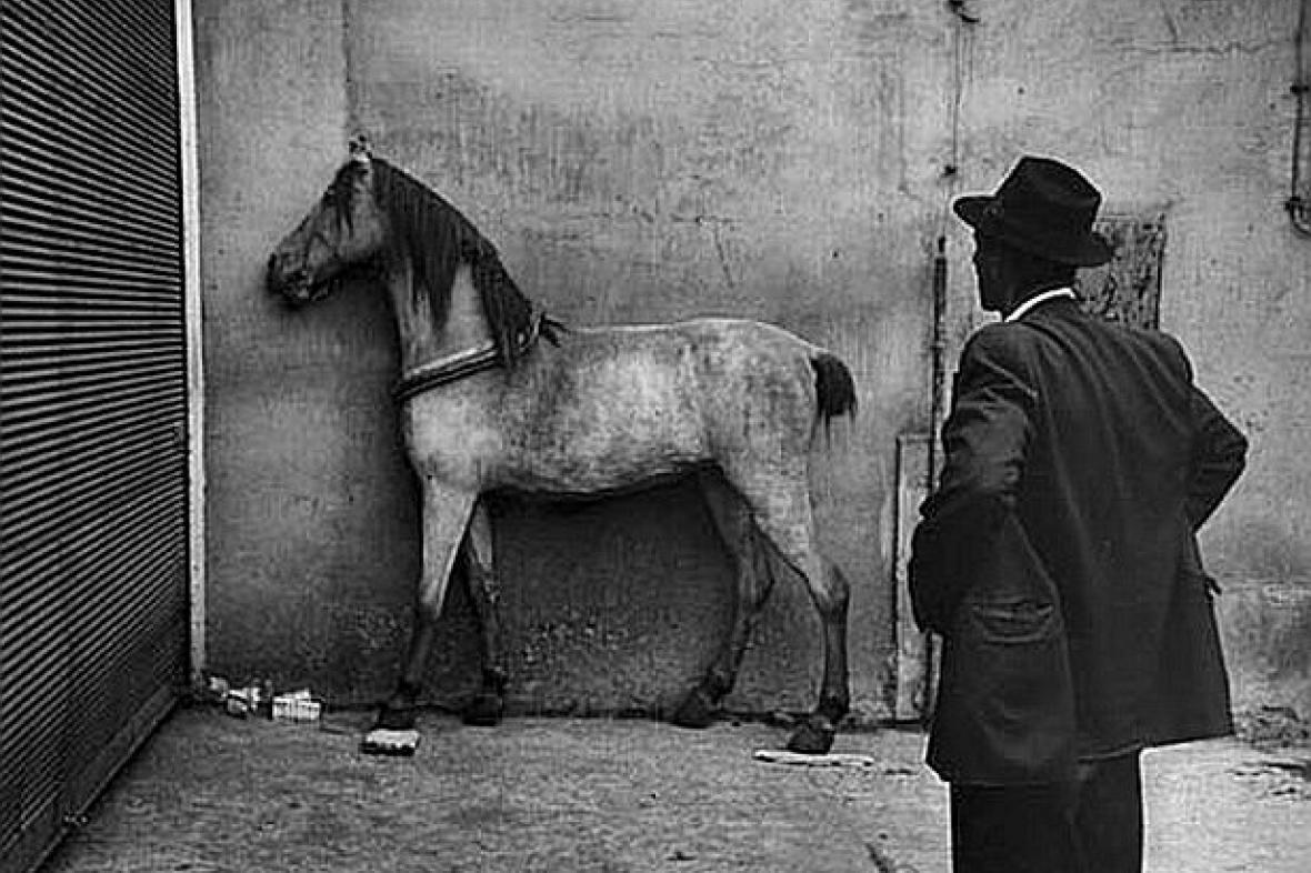 Kůň a Cikán