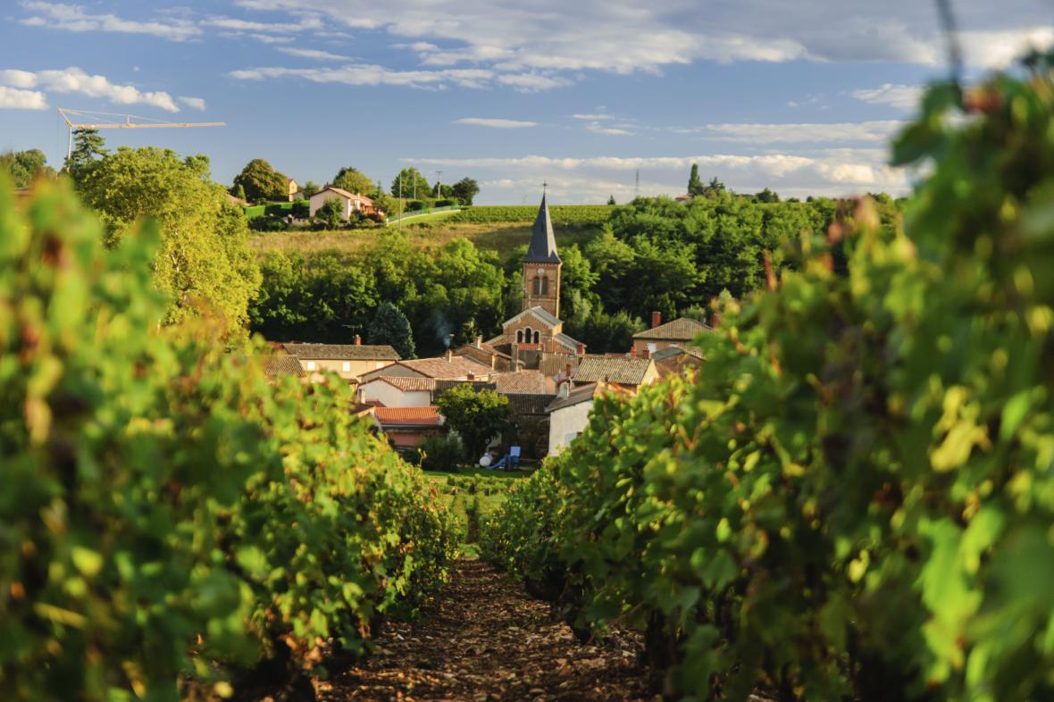 Vinice v regionu Beaujeu
