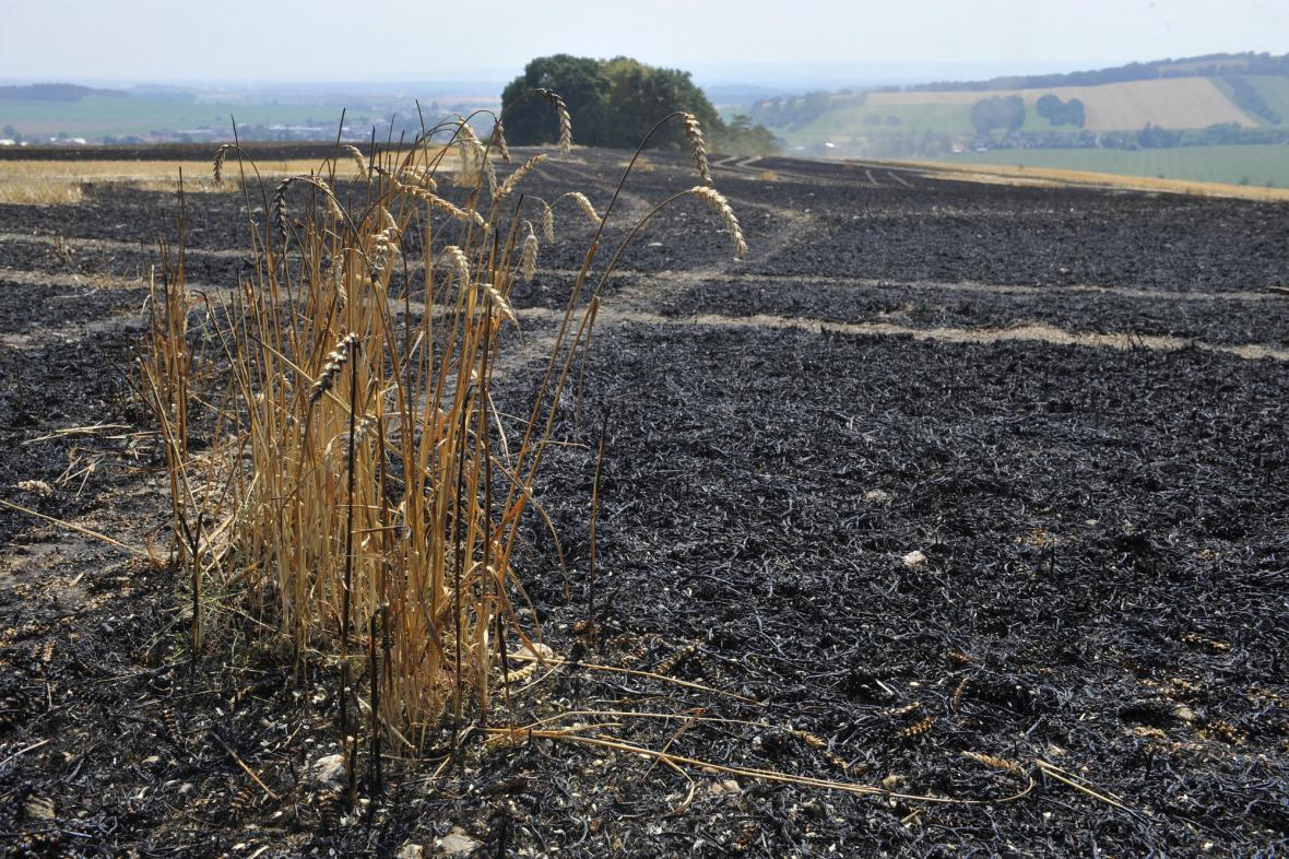 U obce Nová Hradečná shořelo přes pět hektarů pole pšenice