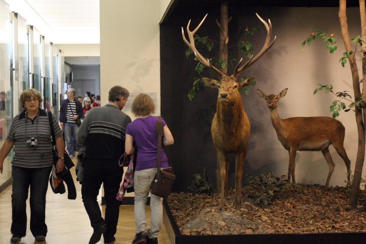 Muzejní noc v Moravském zemském muzeu (2011)