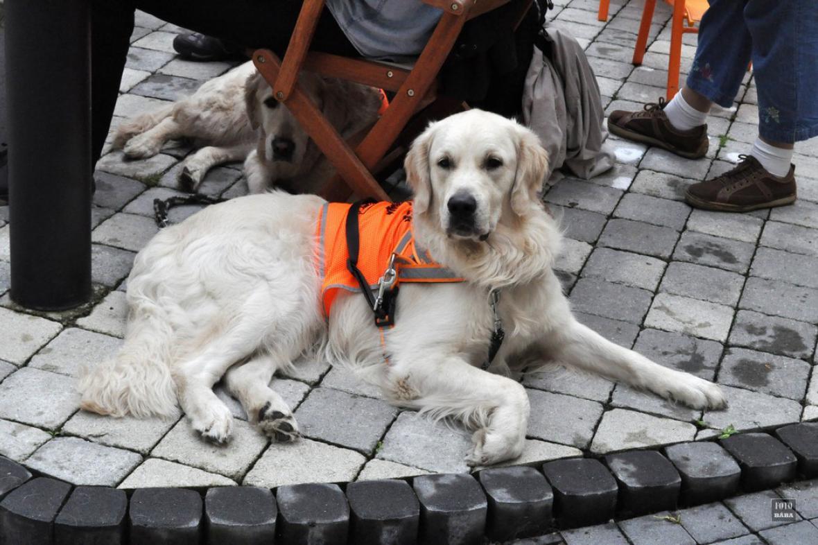 Soutěž vodících psů v Lounech