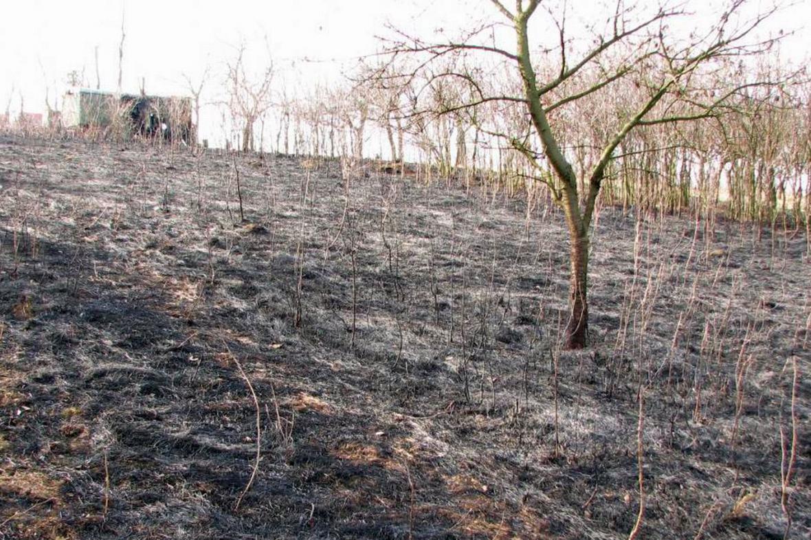 Následky vypalování trávy