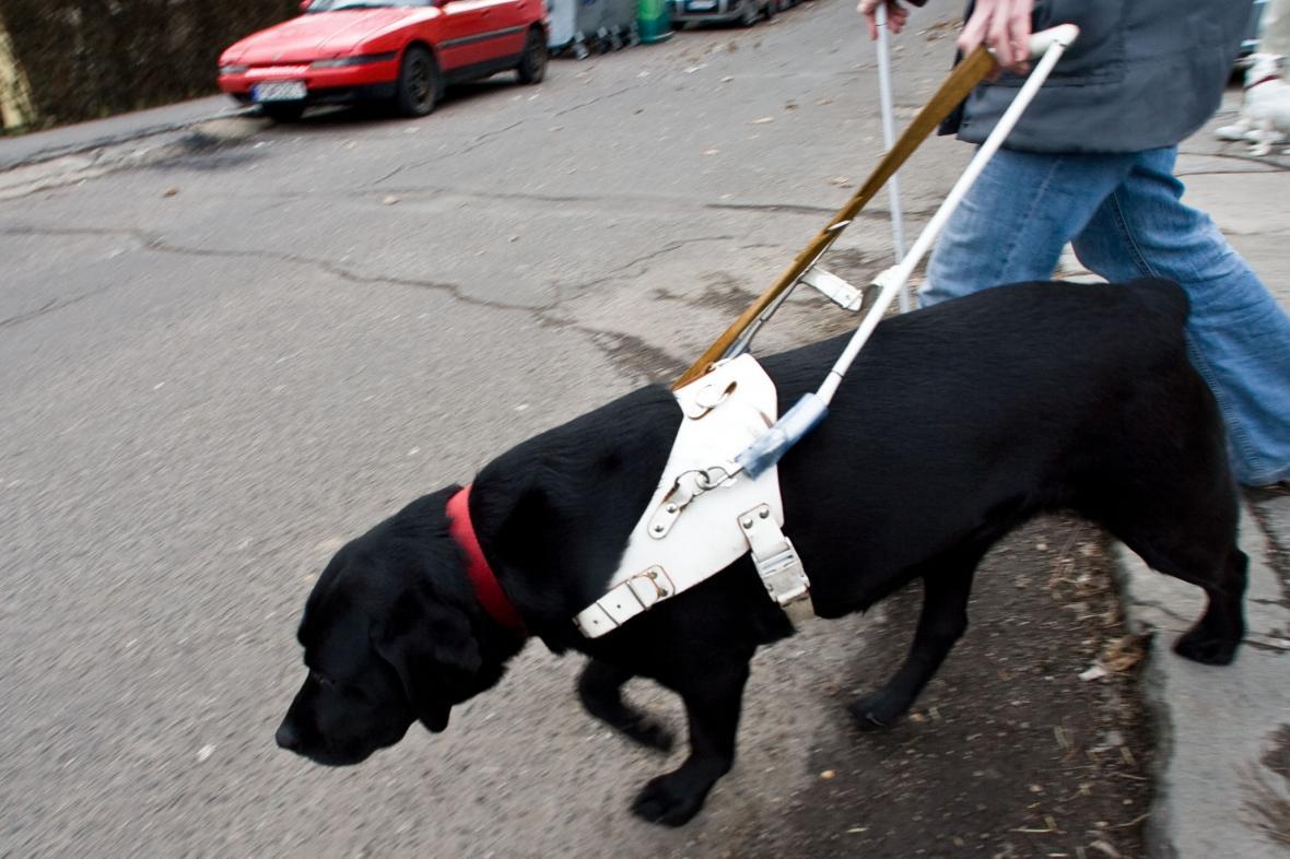 Slepec se svým psem
