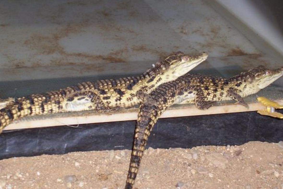 Krokodýlí farma v Jevišovicích