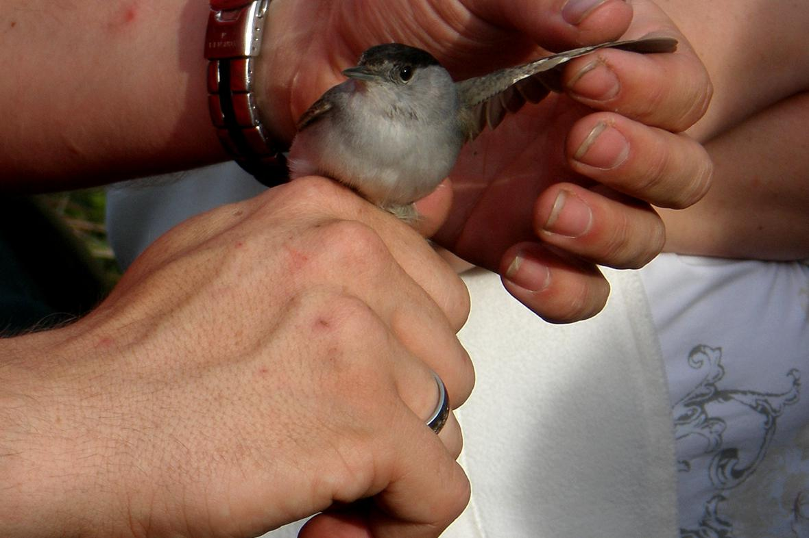 Vítání ptačího zpěvu ve Vojnicích