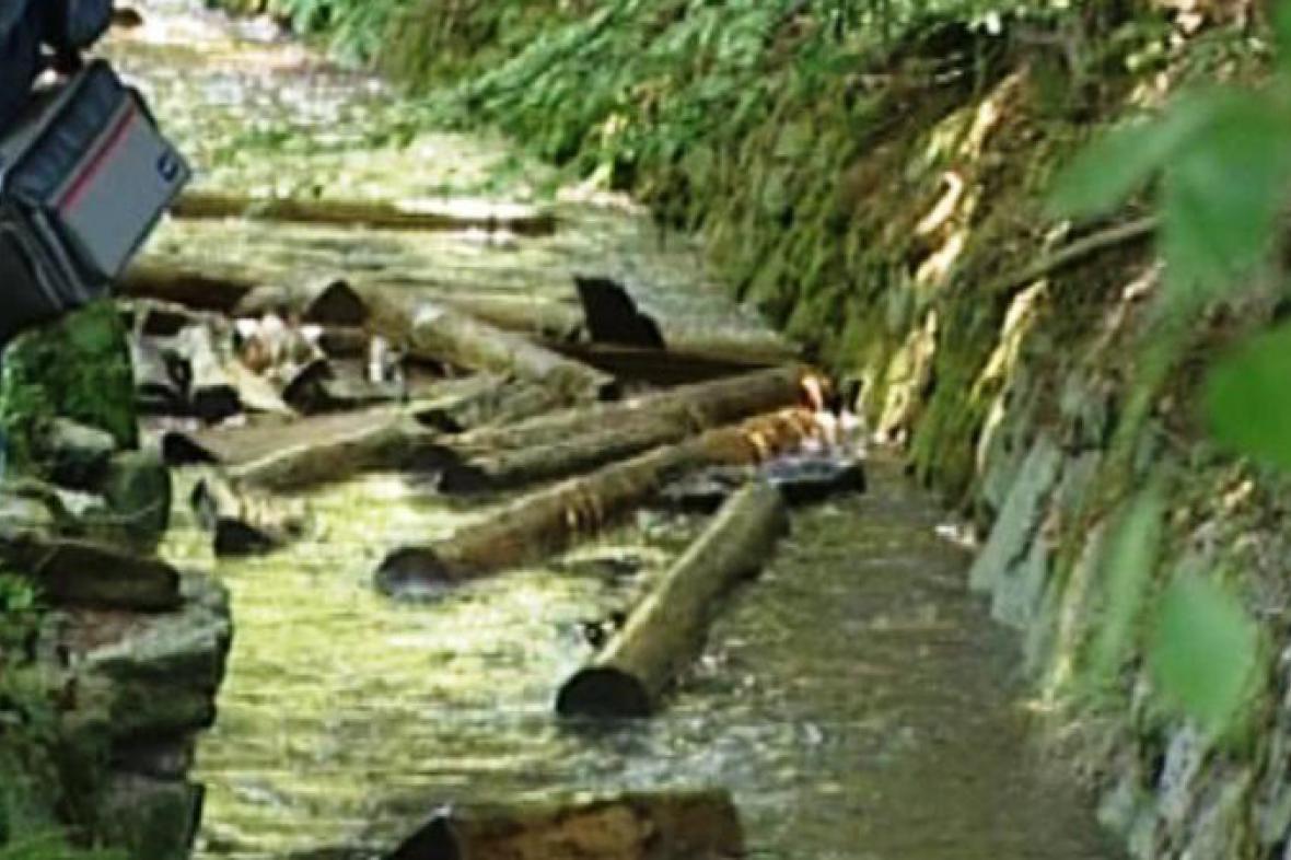 Plavení dřeva