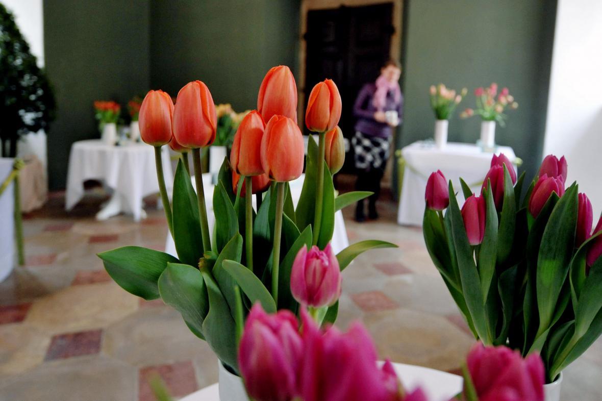 Výstava tulipánů na zámku v Buchlovicích
