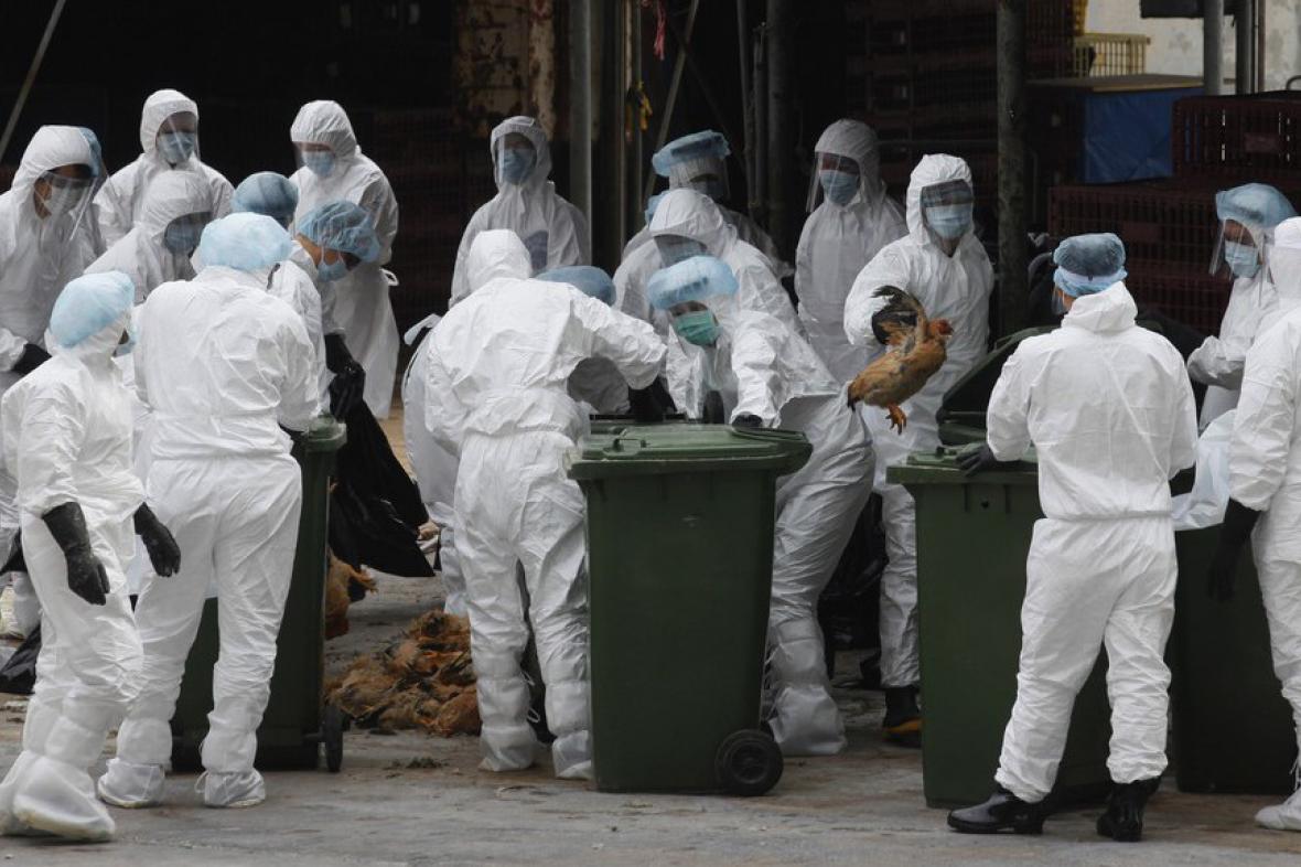 Porážka velkochovu kuřat v Hongkongu