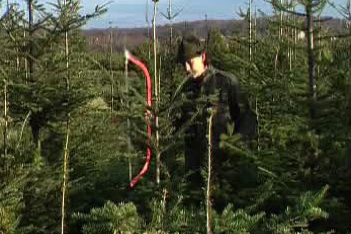 Plantáž s vánočními stromky