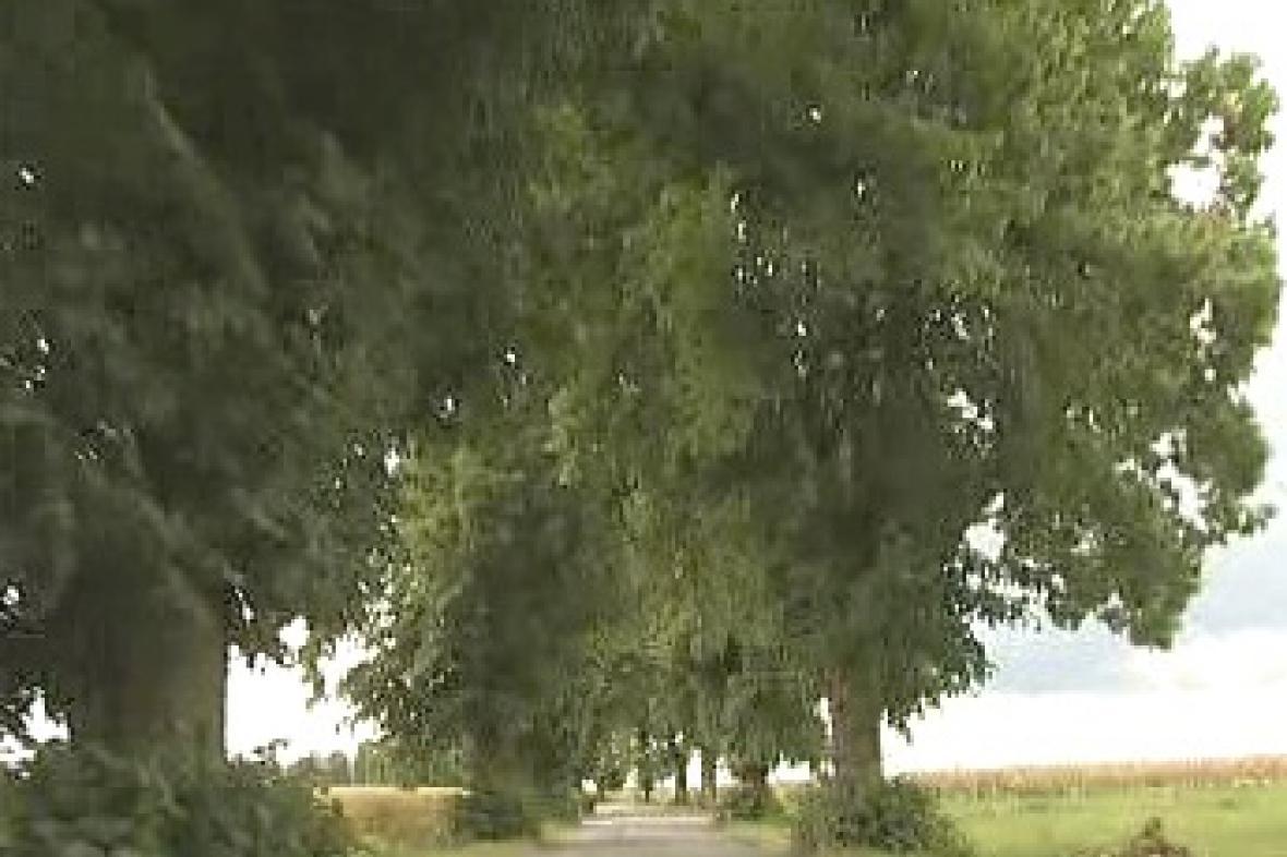 Stromová alej