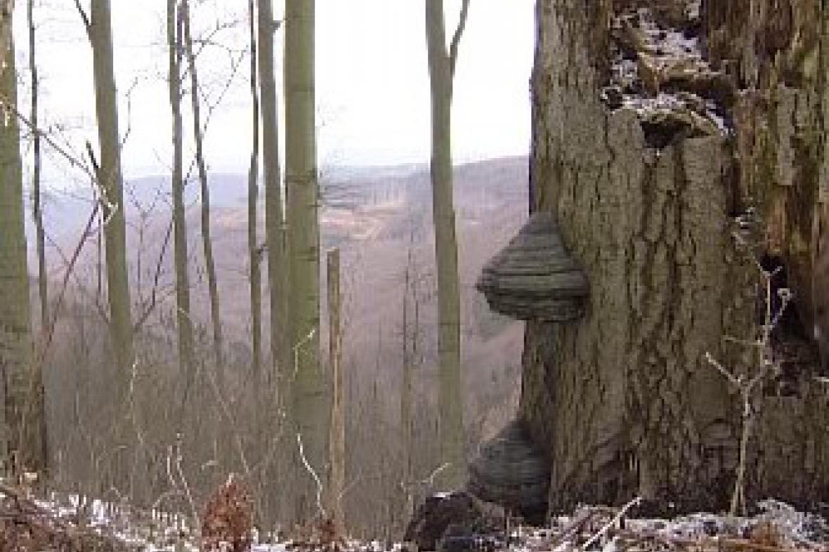Prales v Bílých Karpatech