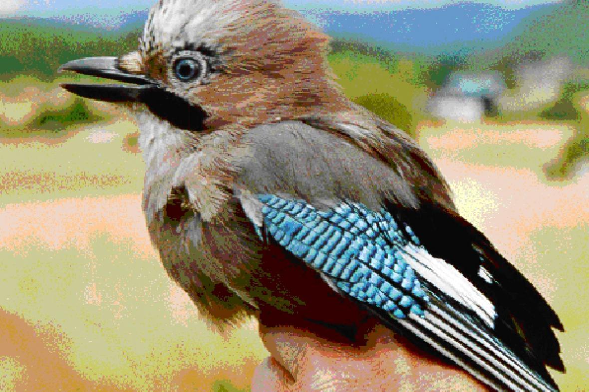 Evropský festival ptactva - ilustrační foto