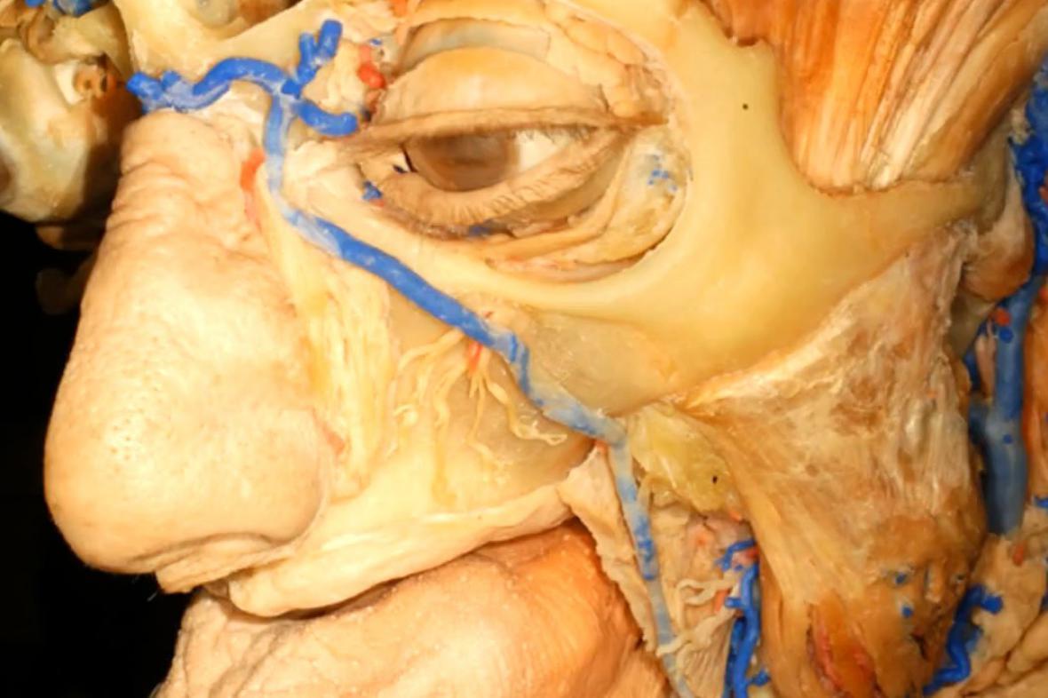 Program 4D Anatomy