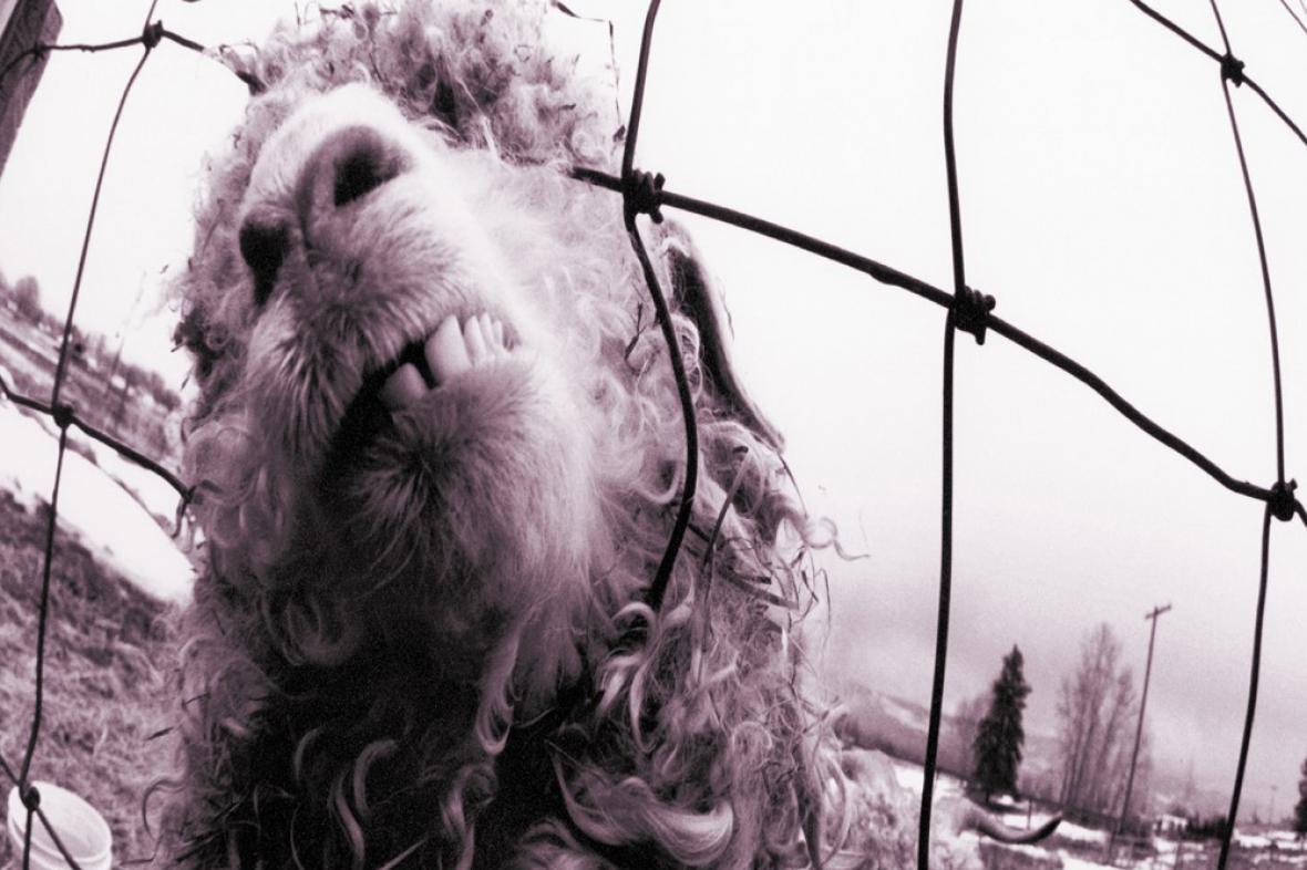 Pearl Jam / Vs.