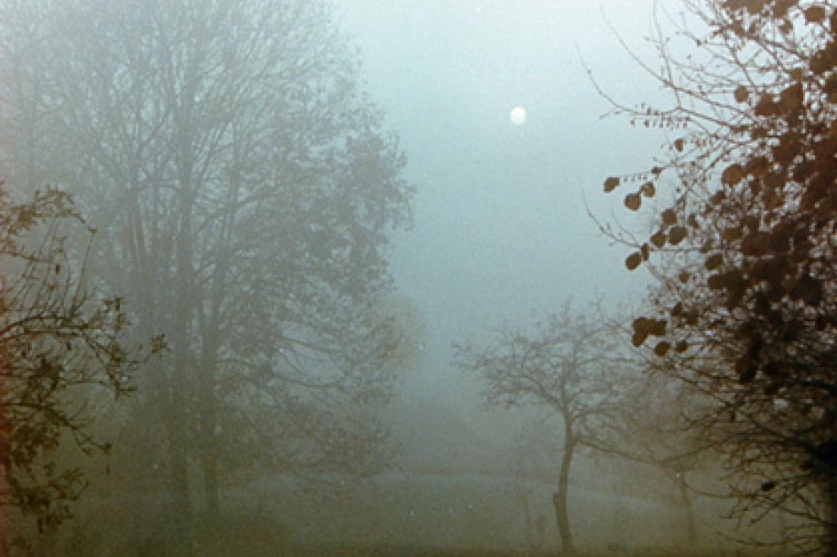 Mlha v krajině