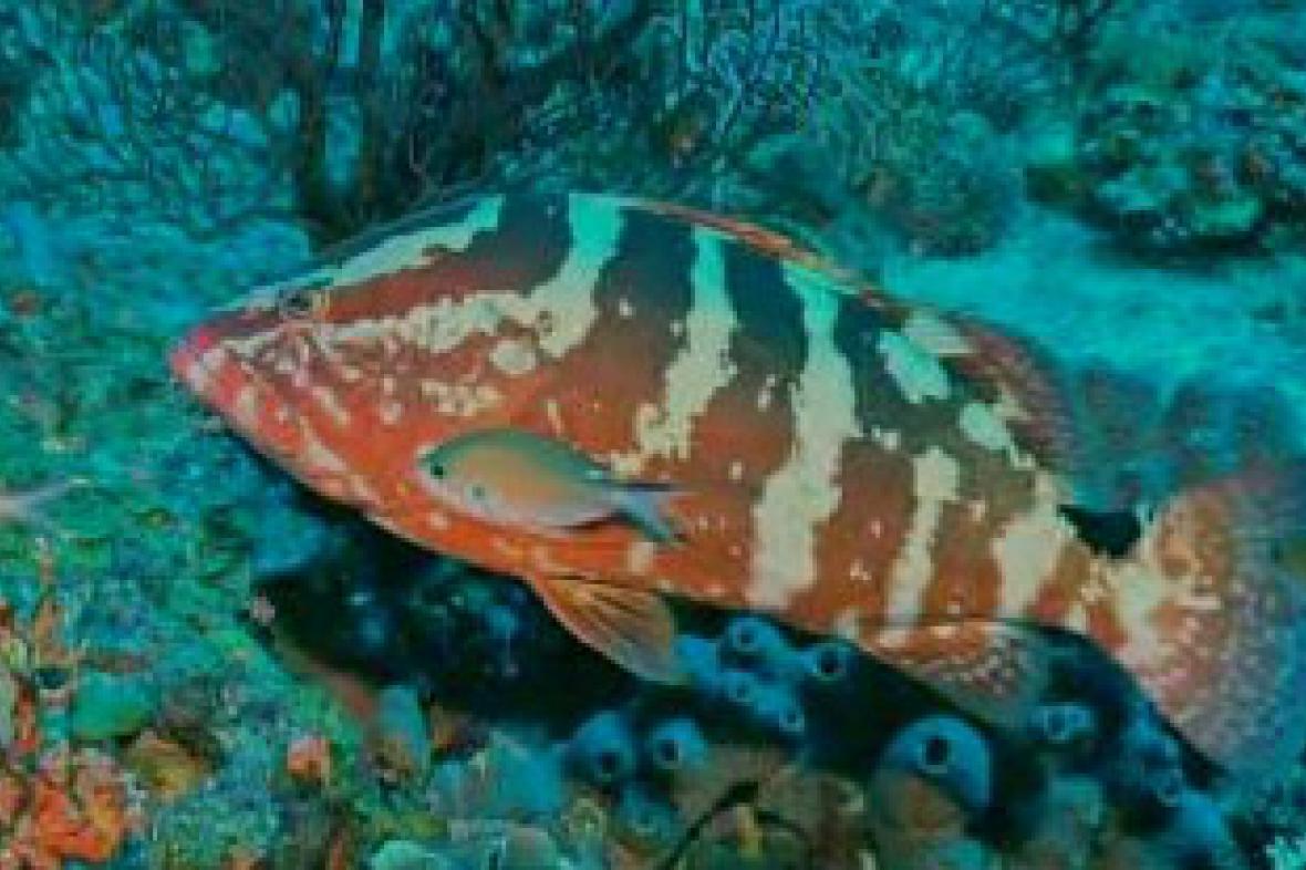 Život v oceánských hloubkách