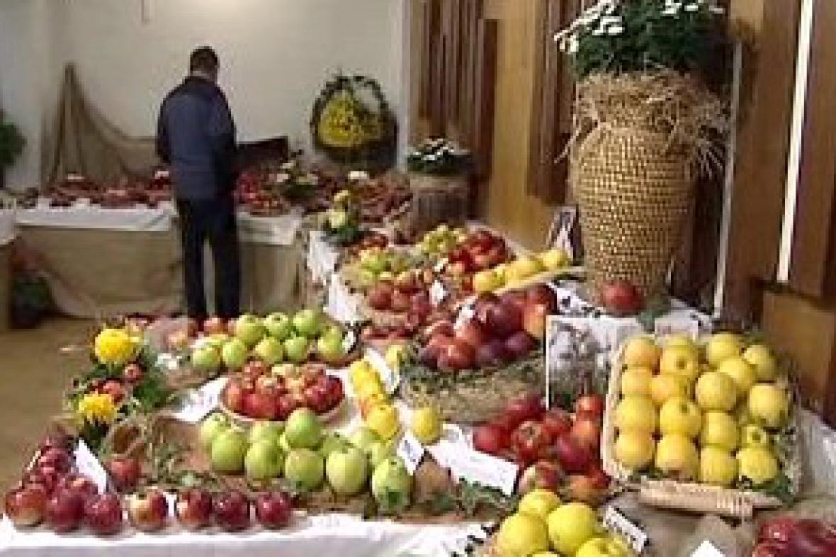 Výstava jablek v Pěnčíně