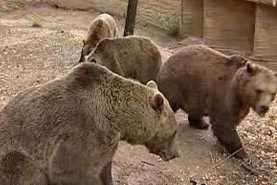 Medvědi v plzeňské zoo