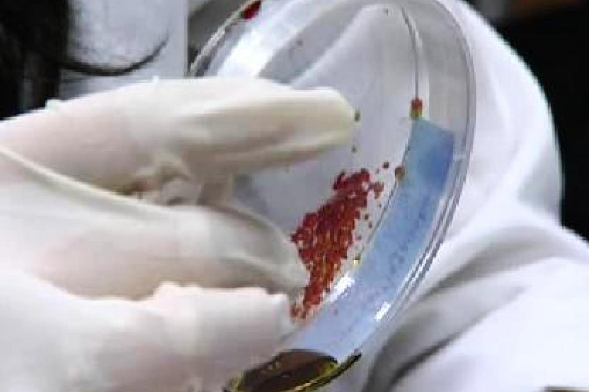 Český výzkum bakterií
