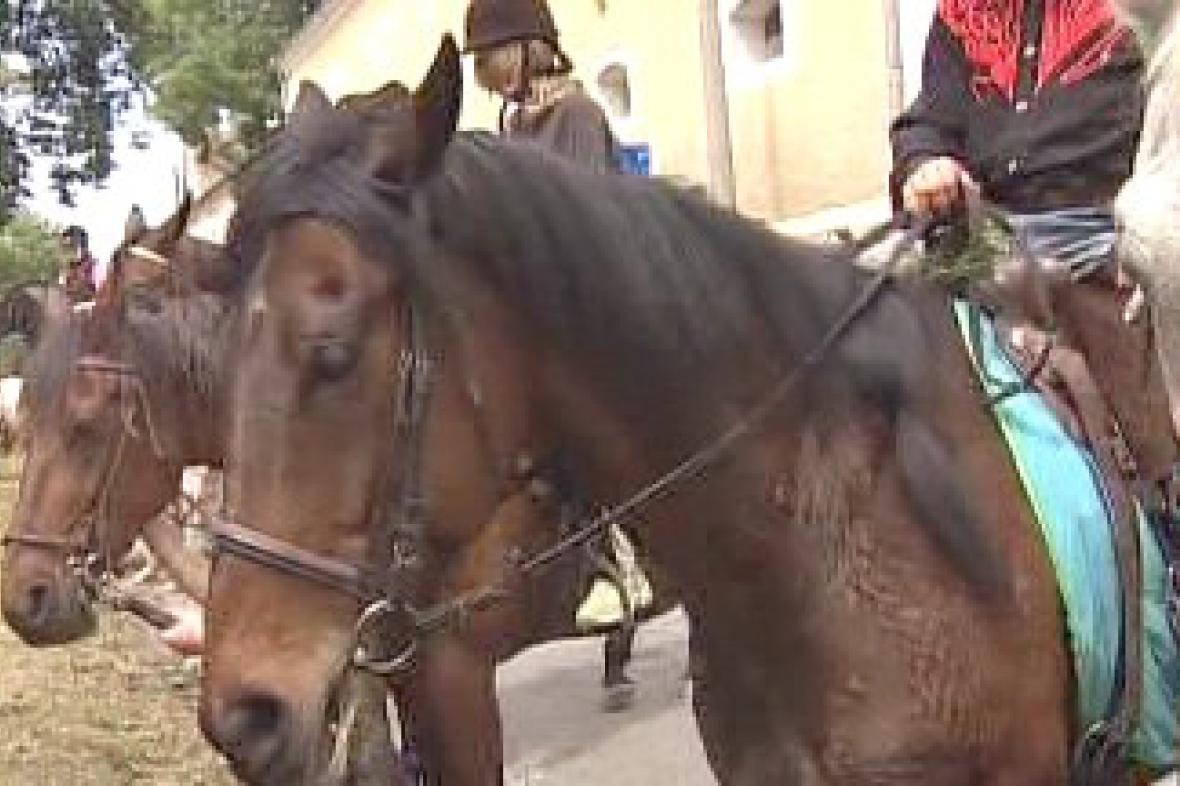 Žehnání koním