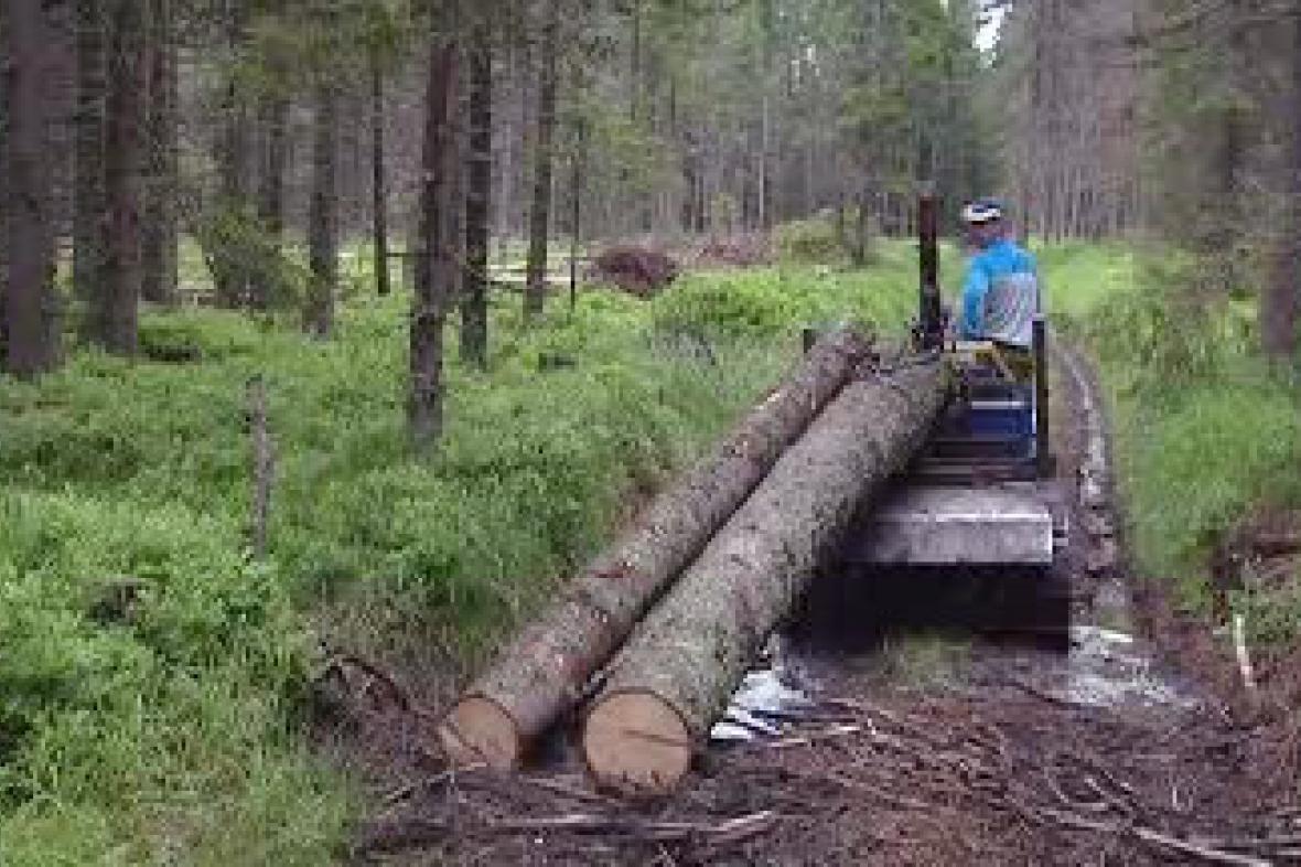 Dřevorubci